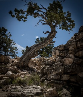 Trees in G Canyon http://wp.me/pSlDL-bx8