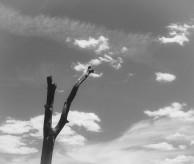 img_6561-branch