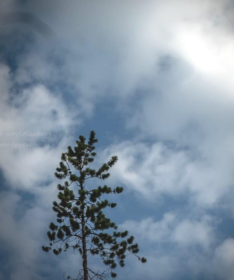 w5a03101-tree
