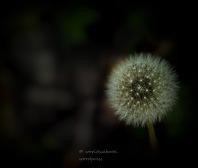 Close up http://wp.me/pSlDL-bNI