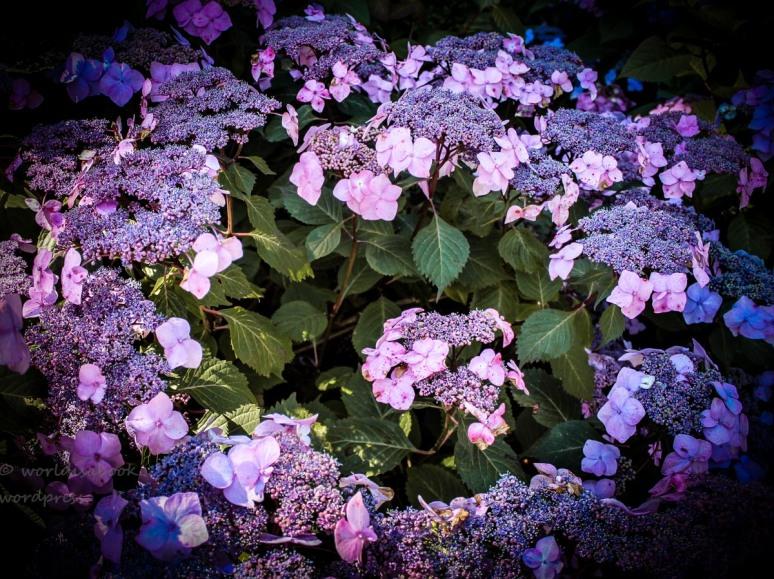 Flower over 9-10