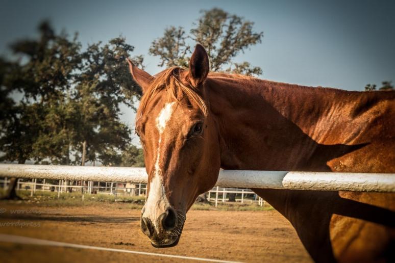 _MG_1492-Edit-2 -horse