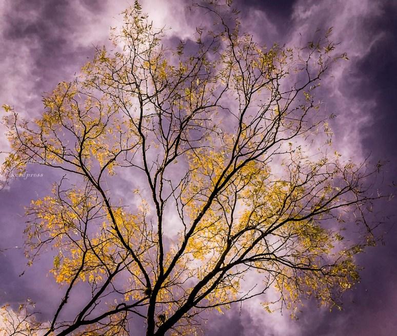 IMG_0519-nature-1