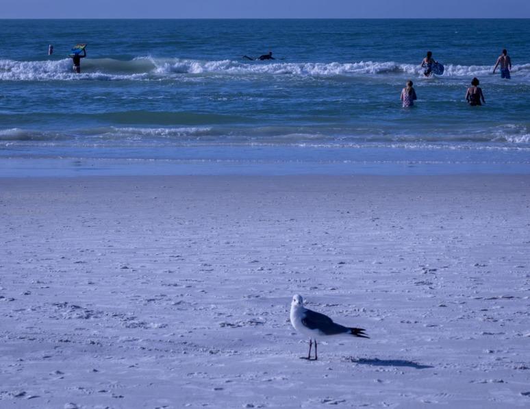 _MG_1942-Sarasota beach