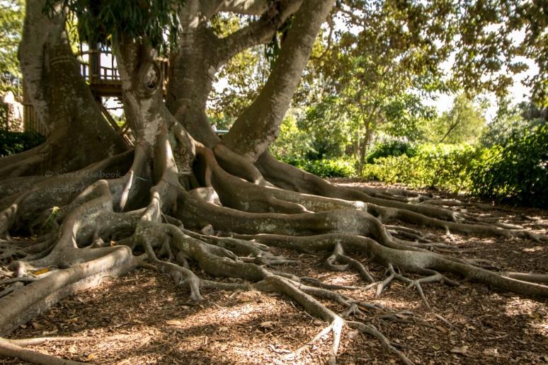 _MG_2130-2-Sarasota Garden