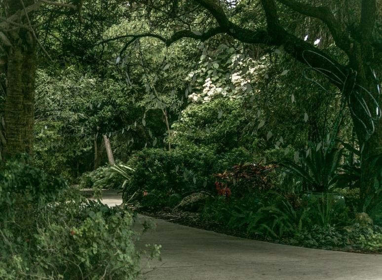 _MG_2154-Sarasota Garden