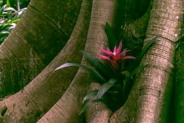 _MG_2160-Sarasota Garden