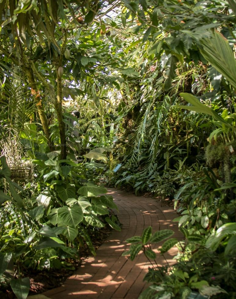 _MG_2241-Sarasota Garden