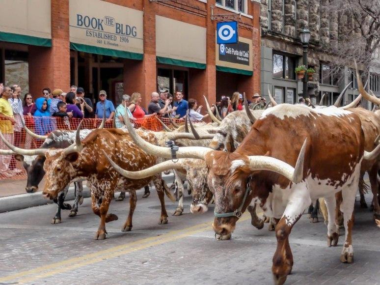 rodeo-parade long-horn