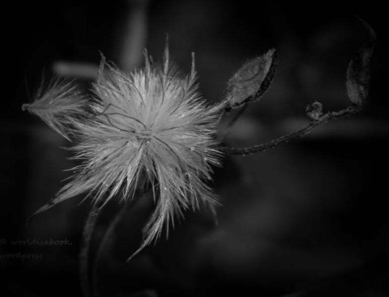 _W5A0951 - weeds- Feb