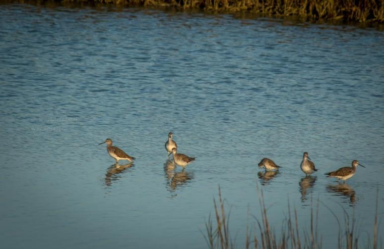 0W5A0708 - birds