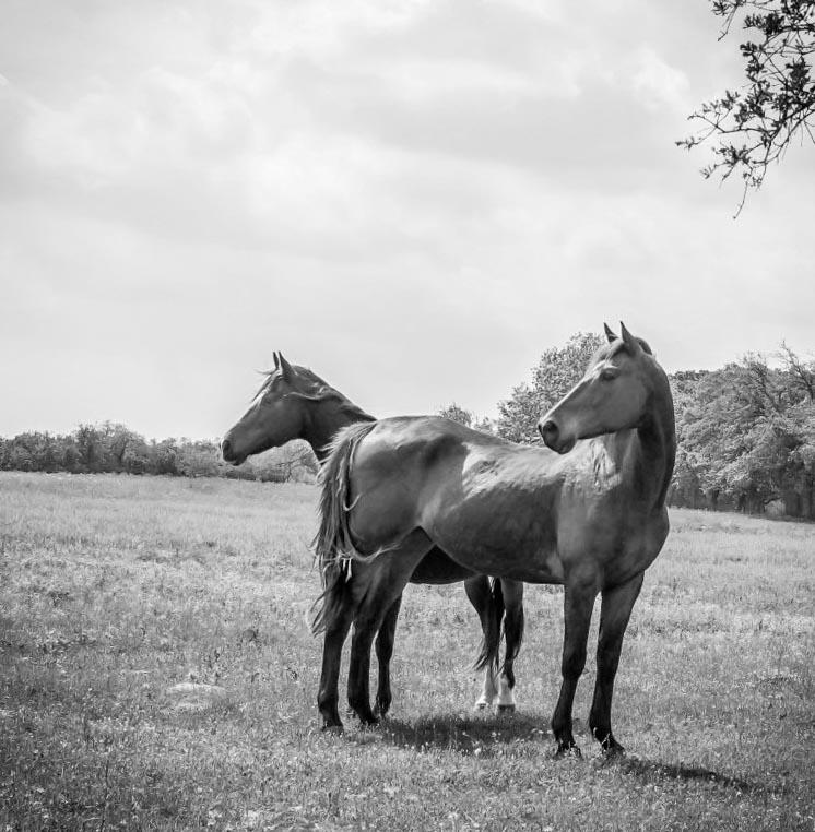 horse-horse