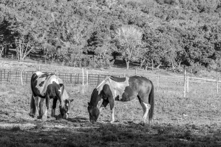 IMG_1398 (1)-horse