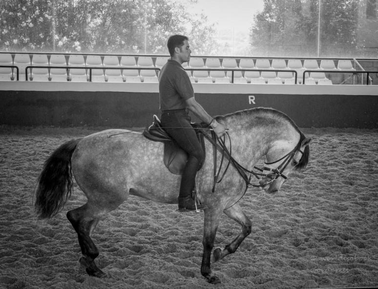 IMG_7594 (3)-horse