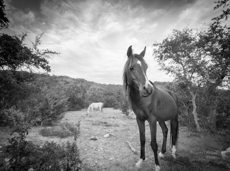 _MG_0036-horse