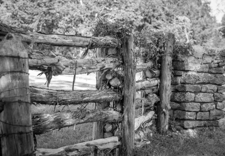 _MG_0414-fences