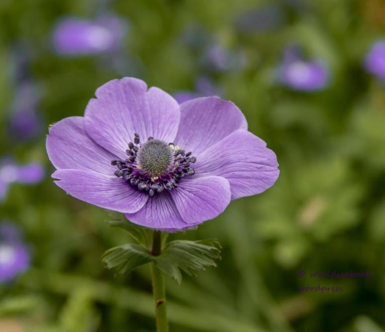 0W5A0211 single flower