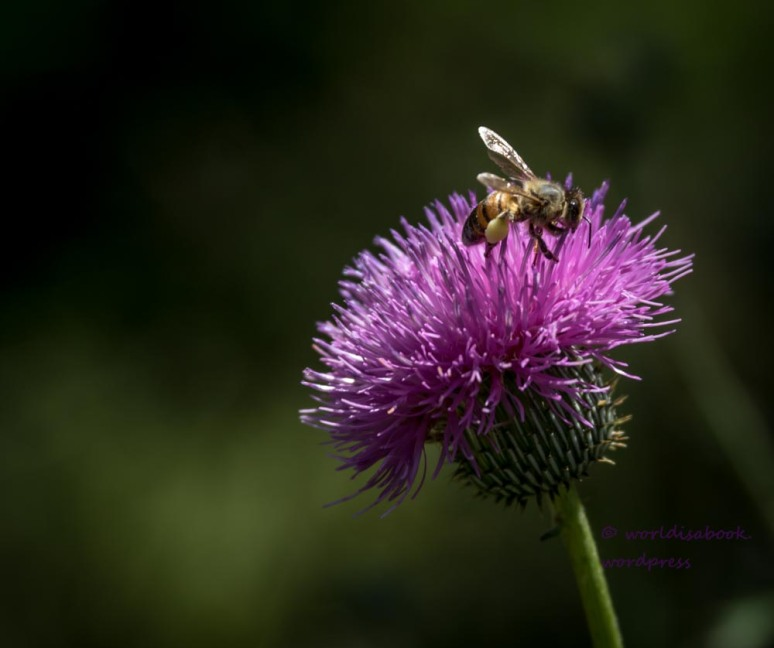 0W5A2530 single flower