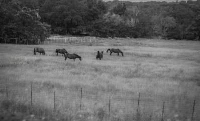 Texas Ranch http://wp.me/pSlDL-dxR