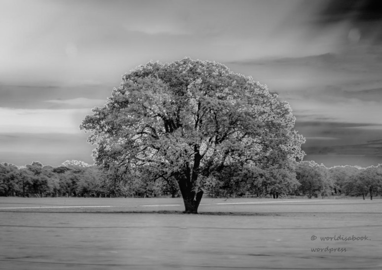 One tree -ABF