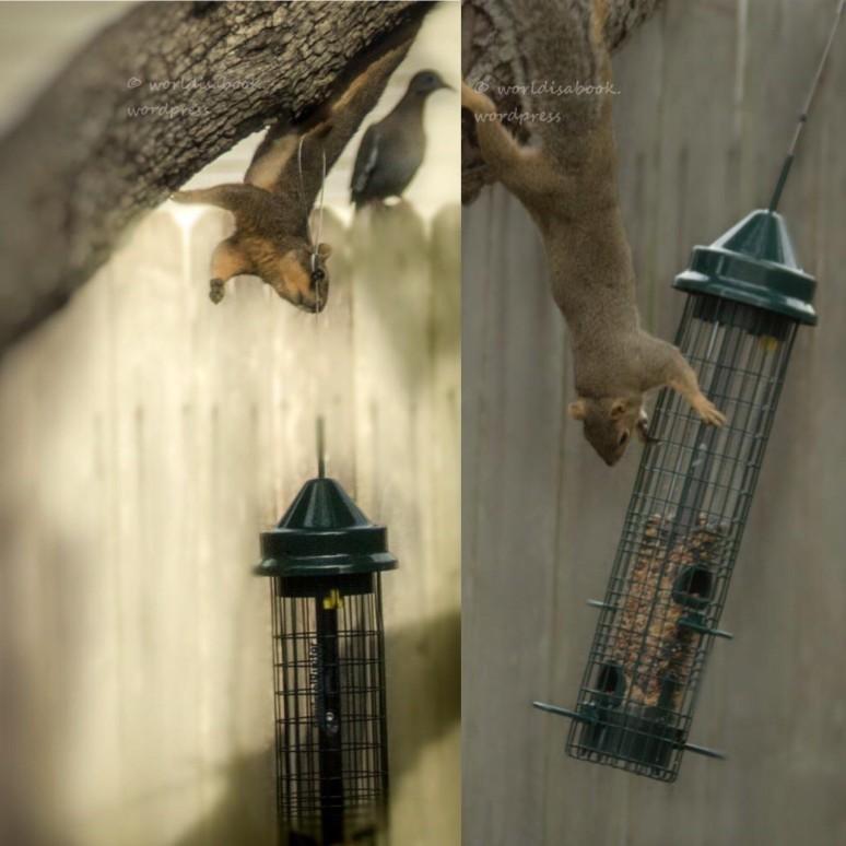 squirrel-feeder 5-8