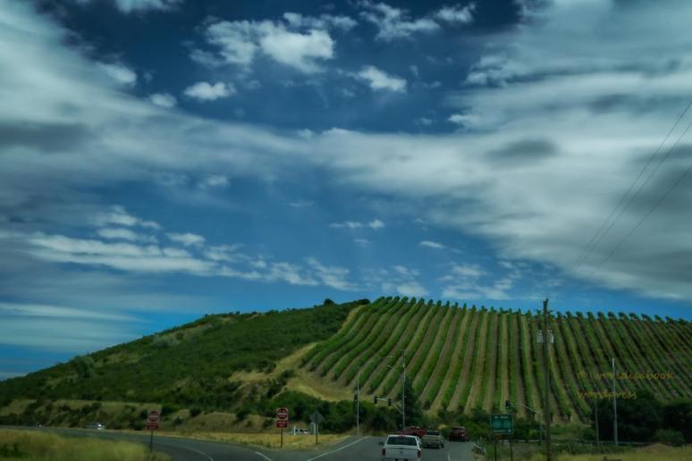 0W5A0145-Edit-winecountry