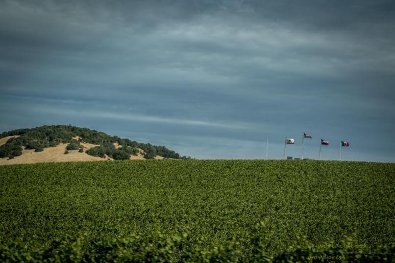 0W5A0691-winecountry