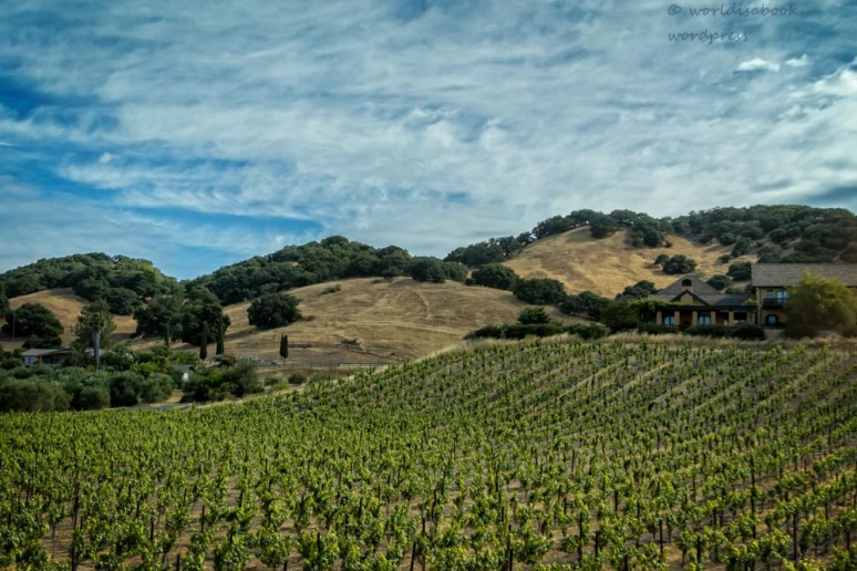 0W5A0704-Edit-Edit-winecountry