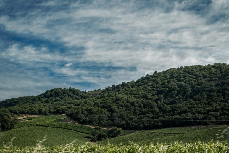 0W5A0711-Edit-Edit-winecountry