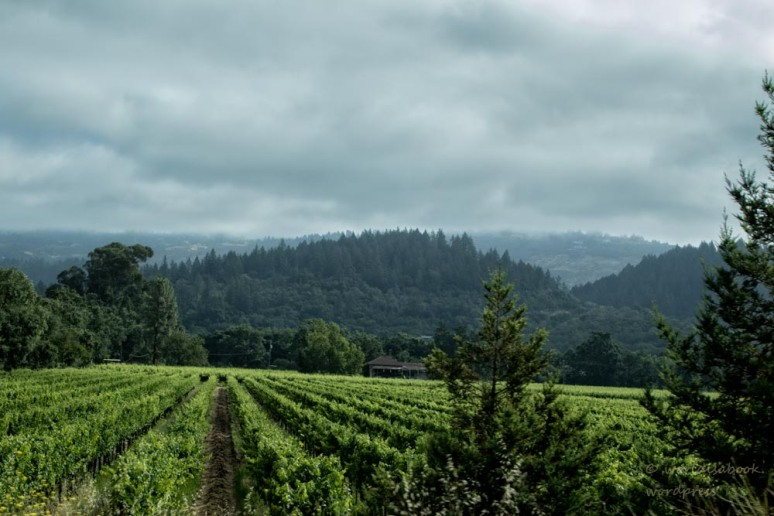 0W5A5119-Edit-winecountry