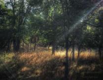 Chasing the sunlight