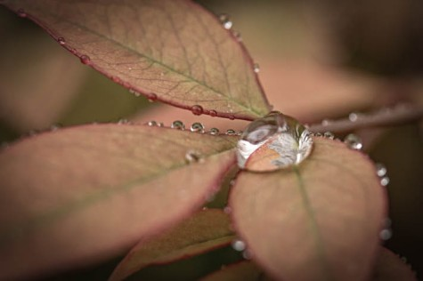 0W5A1711-droplet-3